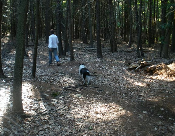 woodsy_blog
