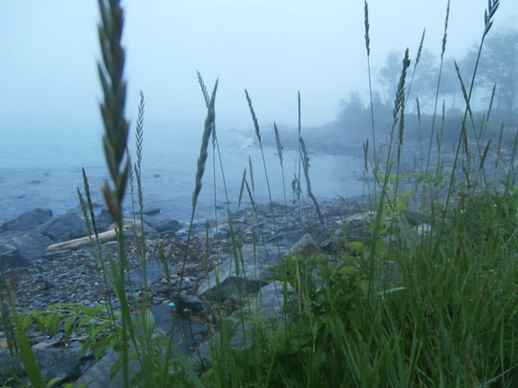 foggy_blog