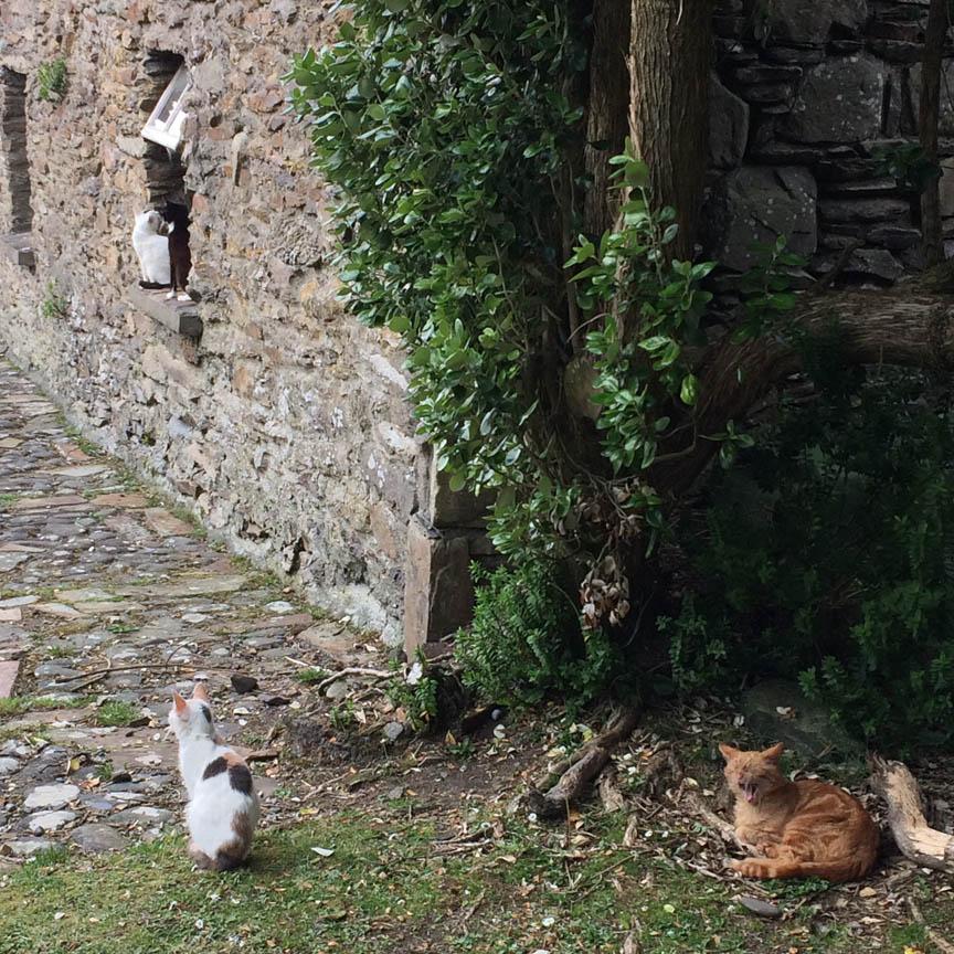 27-fourcats_blog