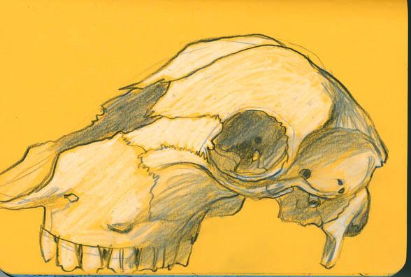 67-skull_blog