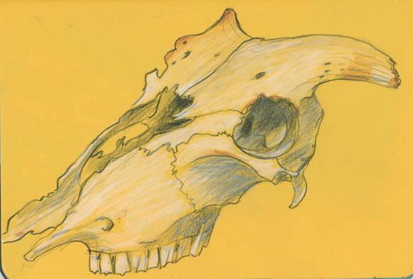 68-skull2_blog
